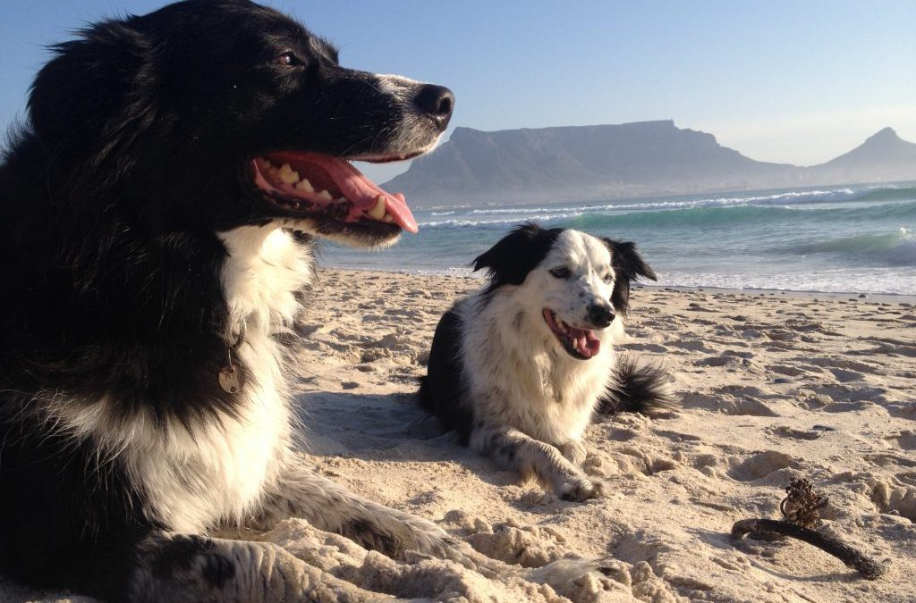 Doggie Friendly Beaches in Cape Town